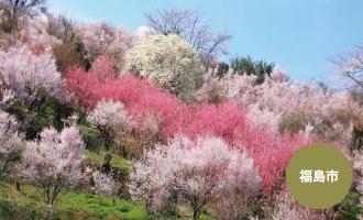 花見山公園(福島市)